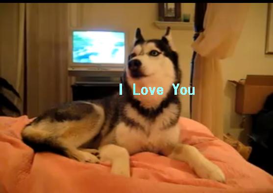dog-ILoveYou
