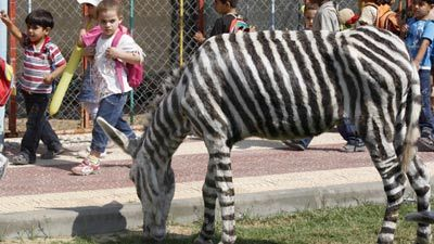 make_zebra