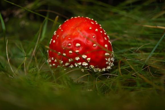beautiful_mushroom01