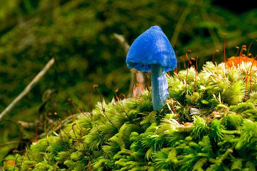 beautiful_mushroom07