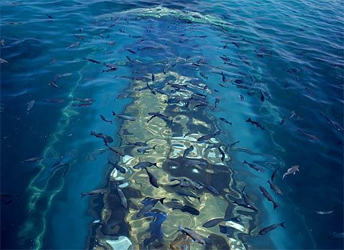 spectacul-undersea-restaurant05