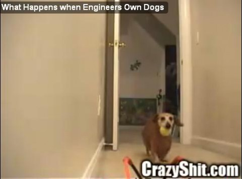dog_enjoy_machine