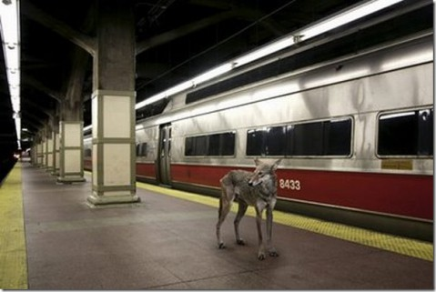 append-city-animals01