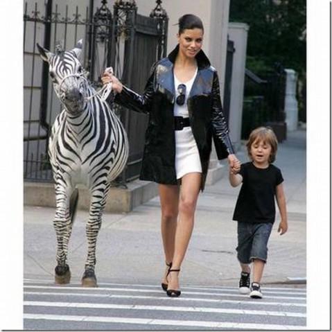 append-city-animals07