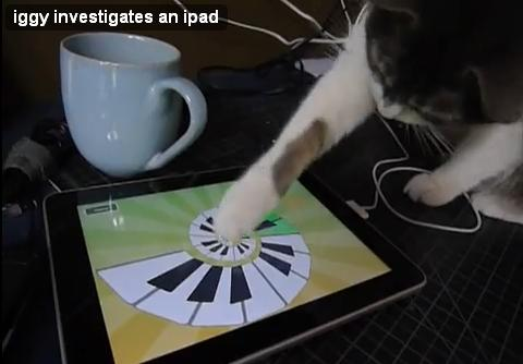 cat_touch_ipad01