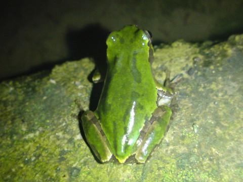 flog-photo01