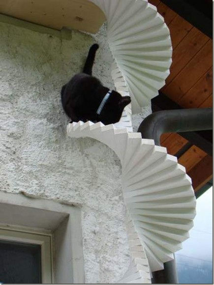 unique_cat_ladder05