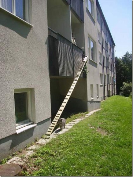 unique_cat_ladder07