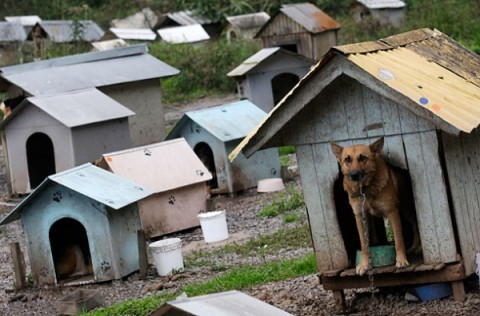 brazil-dog-town3