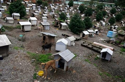 brazil-dog-town5