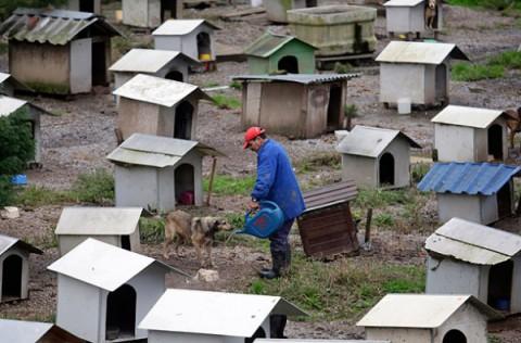 brazil-dog-town9
