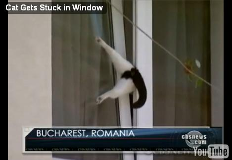 cat-trapped-window01