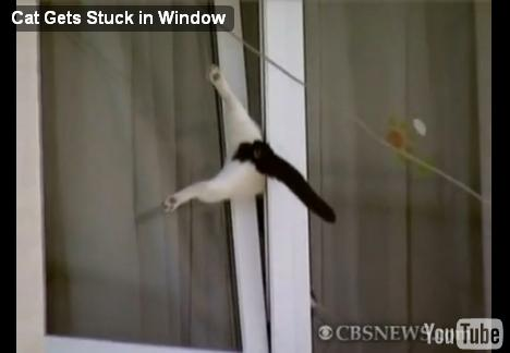 cat-trapped-window02