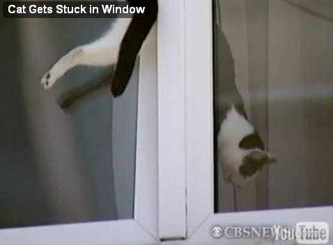 cat-trapped-window06