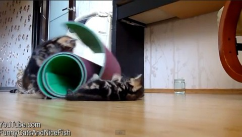 clumsy-cats-compilation02