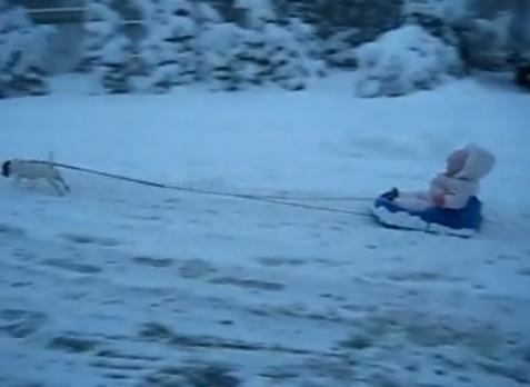 dog-towing-baby-on-a-sled02