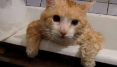 overweight-cat02