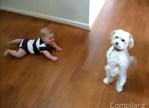 babies-laughing-at-dogs02