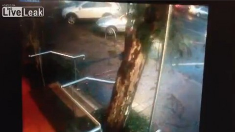 guy-moves-car-before-tree-falls02