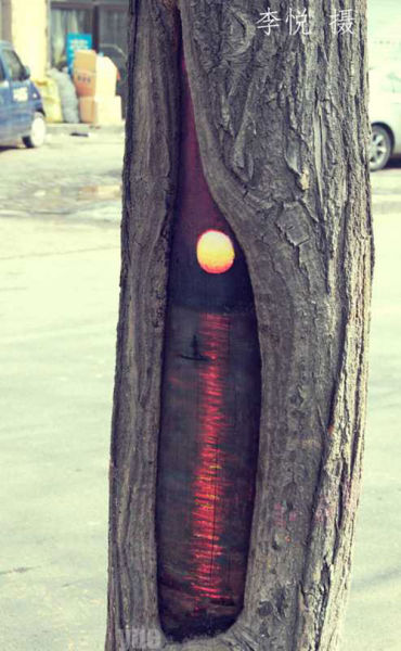 painted-tree-holes05