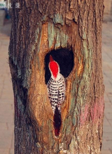 painted-tree-holes12