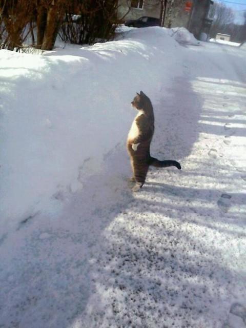 sstanding-cat01