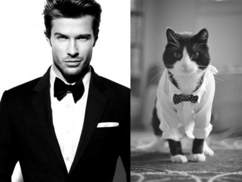 cats-and-male-models02