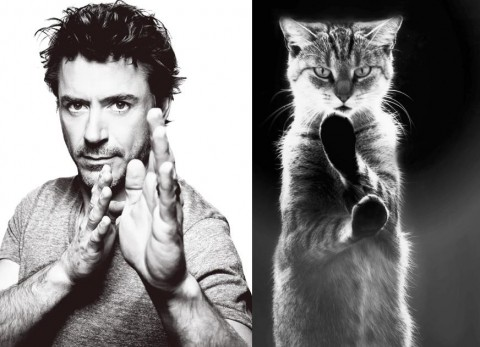 cats-and-male-models06