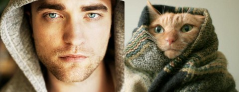 cats-and-male-models10