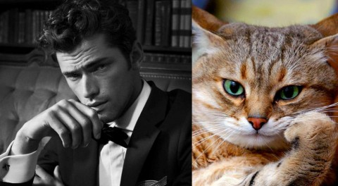 cats-and-male-models16