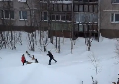 guy-saves-girl-from-wild-dogs02