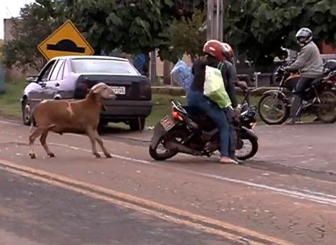 goat-haunt02
