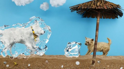 real-dogs-stop-motion-cm04