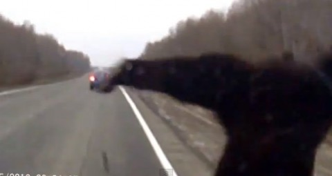 bear-traffic-accident02