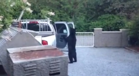 bearjacked02