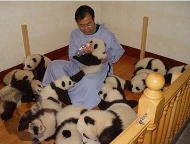 cute-panda-cub01