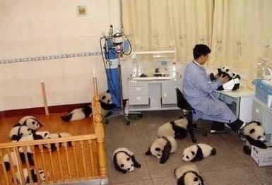 cute-panda-cub03