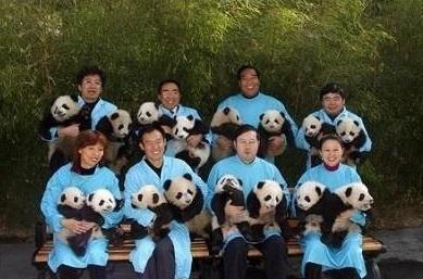 cute-panda-cub04