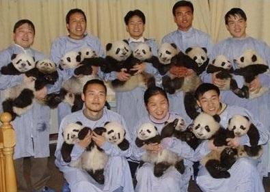 cute-panda-cub08