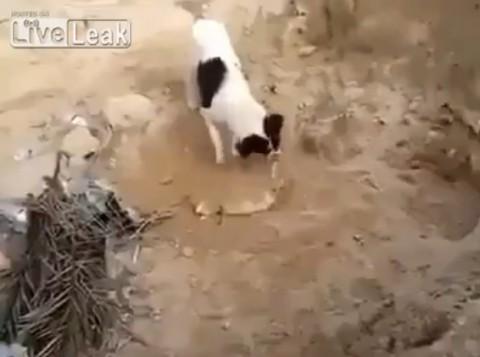 dog-burying-a-dead-puppy02