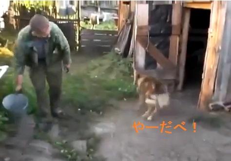 dogs-do-not-like-bath02