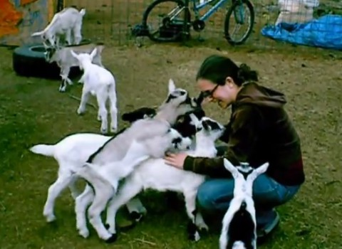 baby-goat-love-pile02
