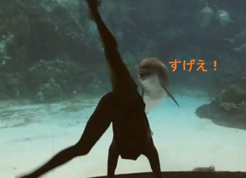dolphin-laugh02