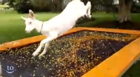 animals-on-trampolines02