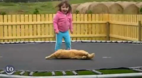 animals-on-trampolines03