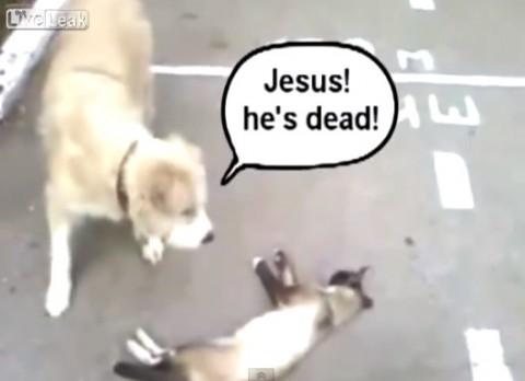 cat-fakes-dead02