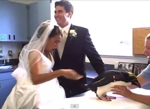 penguin-pees-on-bride02