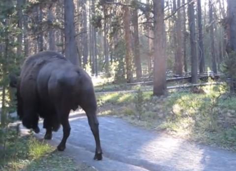 quiet-around-bison02