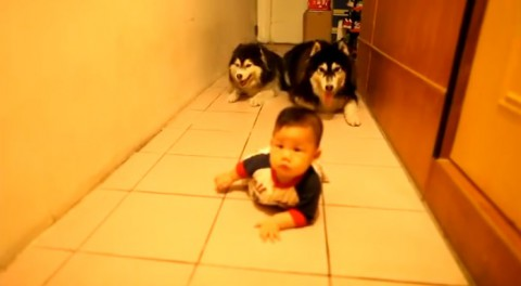 baby-vs-two-dogs02