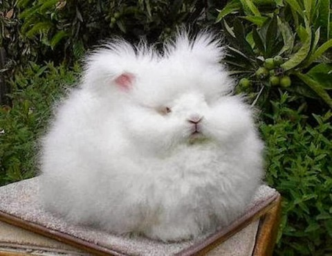 most-fluffy-bunny05